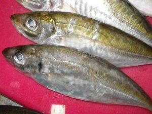 釣った魚を食す